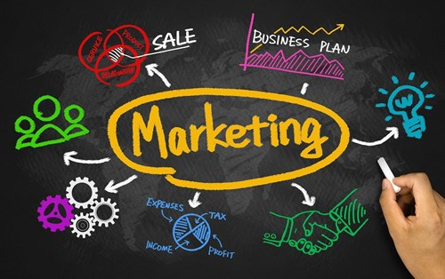 What opportunities are available for Bachelor of Marketing